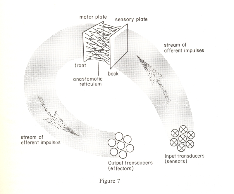 "Image from ""The Brain of the Firm"" by Stafford Beer."
